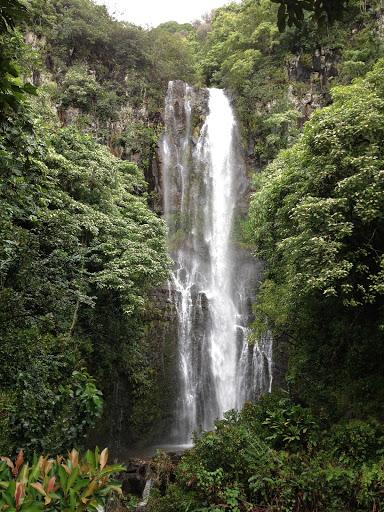 Bamboo Forest in Hana, Maui, Hawaii