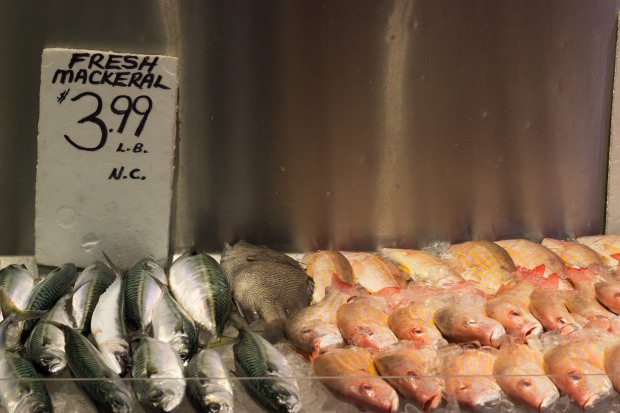 Fish Store in Kensington Market